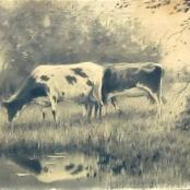 Sold|De Jongh, Tinus | Cattle grazing