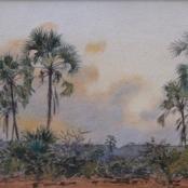 Sold|Mayer, Erich | Savanna Trees