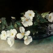 Sold | Oerder, Frans | Begonias
