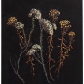 Human, Ronel | Selago Bitterbush, Aarbossie and strawflower, strooiblom cuttings