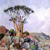 Sold | Theys, Conrad | Namakwaland, Kokerbome